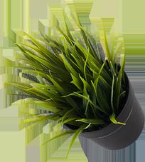 jt-dp-plant.png